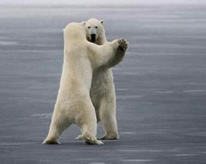 5087_2544_polar-bear-waltz